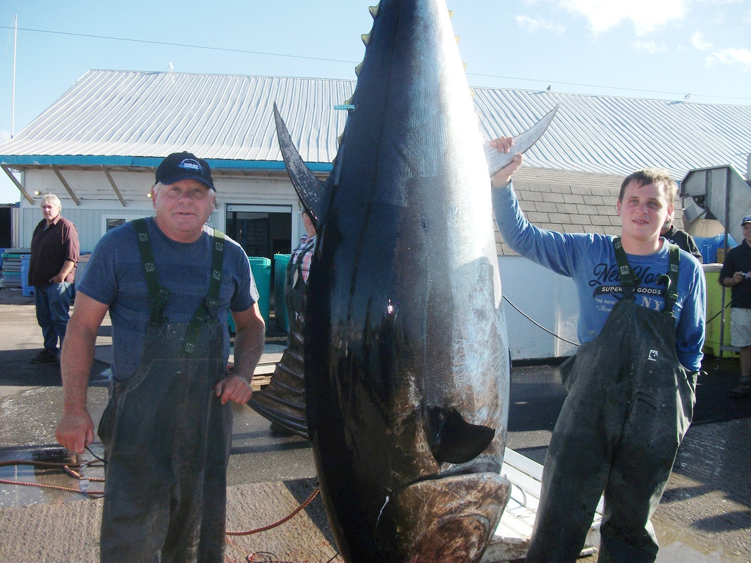 Standing next to a Giant Bluefin Tuna